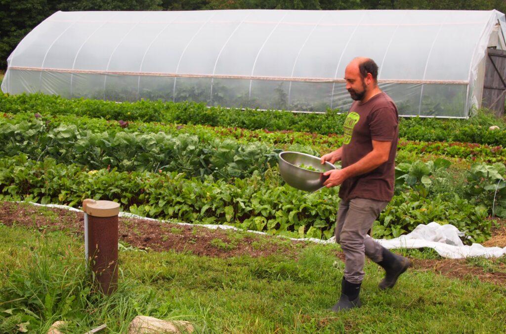 Rosemont employee picks lettuce from the farm for dinner